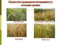 Результати проведення експерименту в польових умовах АМІСТАР 0.5Х2 КОНТРОЛЬ V...