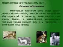 Змінюється протягом року колір шерсті деяких лісових звірів, таких як ласка, ...