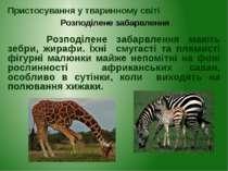 Розподілене забарвлення мають зебри, жирафи. Їхні смугасті та плямисті фігурн...