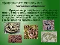 Прекрасне розподілене забарвлення мають багато змій. Яскравий геометричний ма...