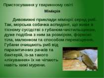 Дивовижні приклади мімікрії серед риб. Так, морська собачка аспидонт, що живе...