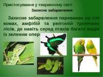 Пристосування у тваринному світі Захисне забарвлення Захисне забарвлення пере...