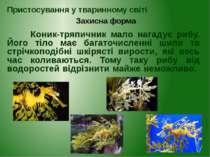 Коник-тряпичник мало нагадує рибу. Його тіло має багаточисленні шипи та стріч...