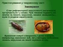 Стан рефлекторної нерухомості (каталепсія) зустрічається і у комах. При лякан...