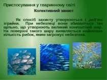 Як спосіб захисту утворюються і риб'ячі зграйки. При небезпеці вони збиваютьс...