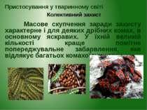 Масове скупчення заради захисту характерне і для деяких дрібних комах, в осно...
