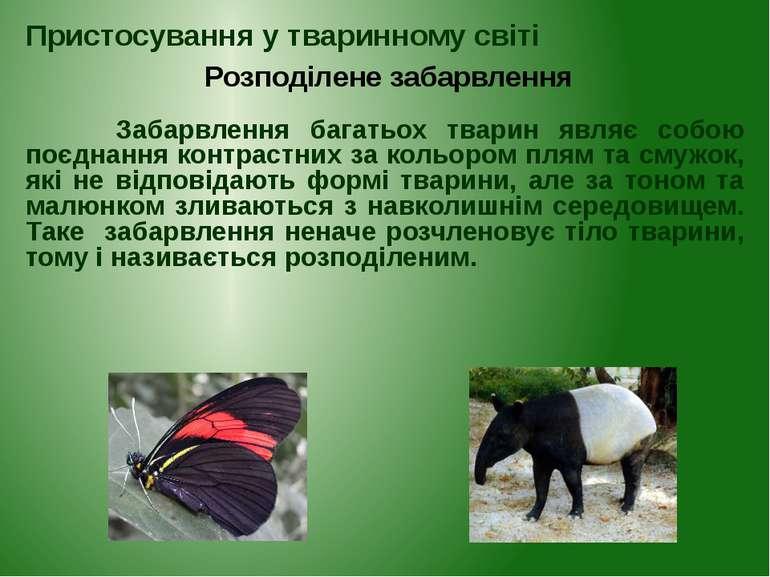 Забарвлення багатьох тварин являє собою поєднання контрастних за кольором пля...