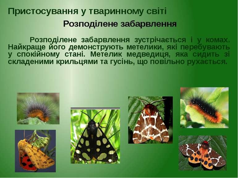 Розподілене забарвлення зустрічається і у комах. Найкраще його демонструють м...