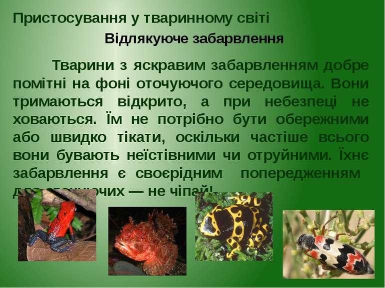 Тварини з яскравим забарвленням добре помітні на фоні оточуючого середовища. ...