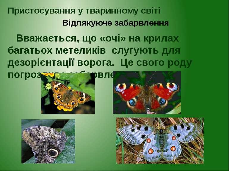 Вважається, що «очі» на крилах багатьох метеликів слугують для дезорієнтації ...