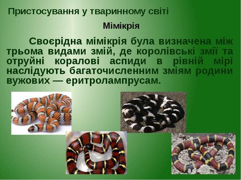 Своєрідна мімікрія була визначена між трьома видами змій, де королівські змії...