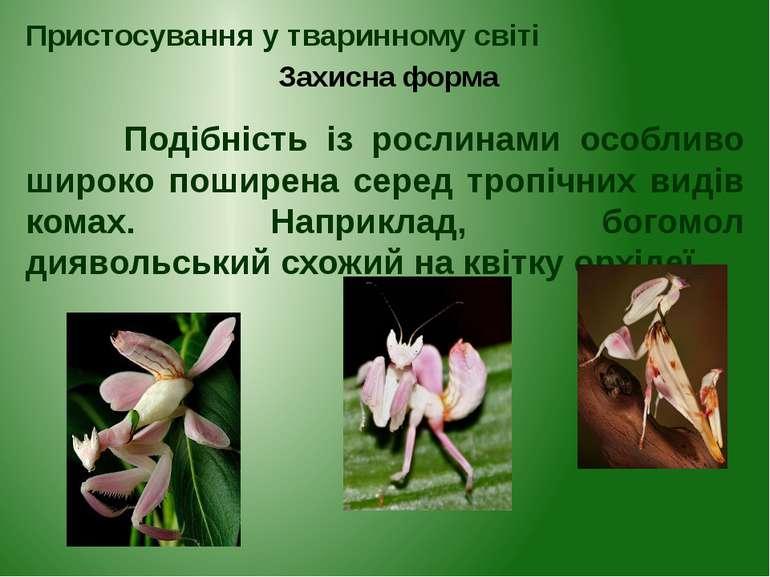 Подібність із рослинами особливо широко поширена серед тропічних видів комах....