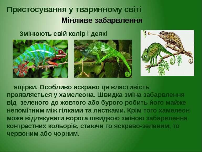 Змінюють свій колір і деякі ящірки. Особливо яскраво ця властивість проявляєт...