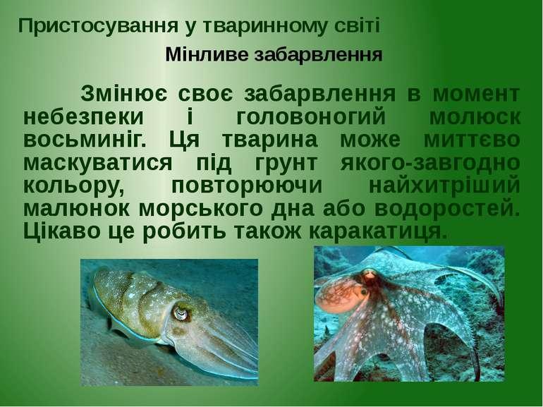 Змінює своє забарвлення в момент небезпеки і головоногий молюск восьминіг. Ця...