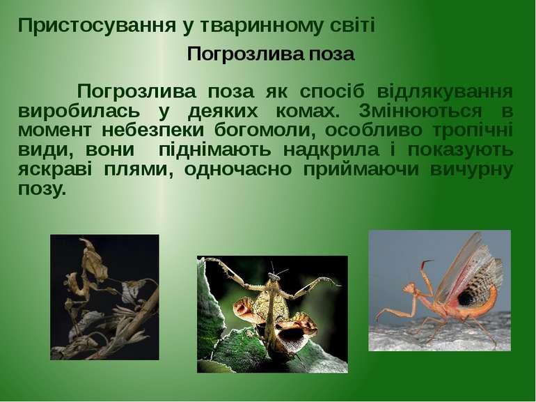 Погрозлива поза як спосіб відлякування виробилась у деяких комах. Змінюються ...