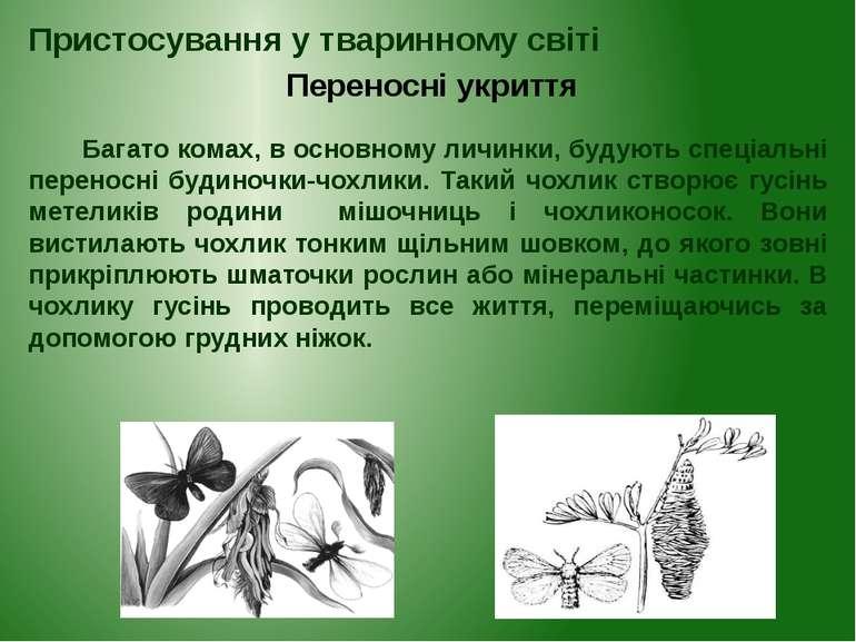 Багато комах, в основному личинки, будують спеціальні переносні будиночки-чох...