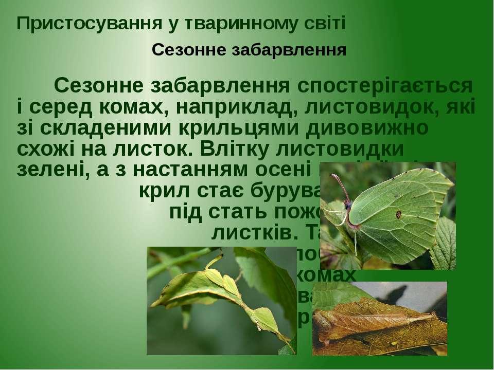 Сезонне забарвлення спостерігається і серед комах, наприклад, листовидок, які...