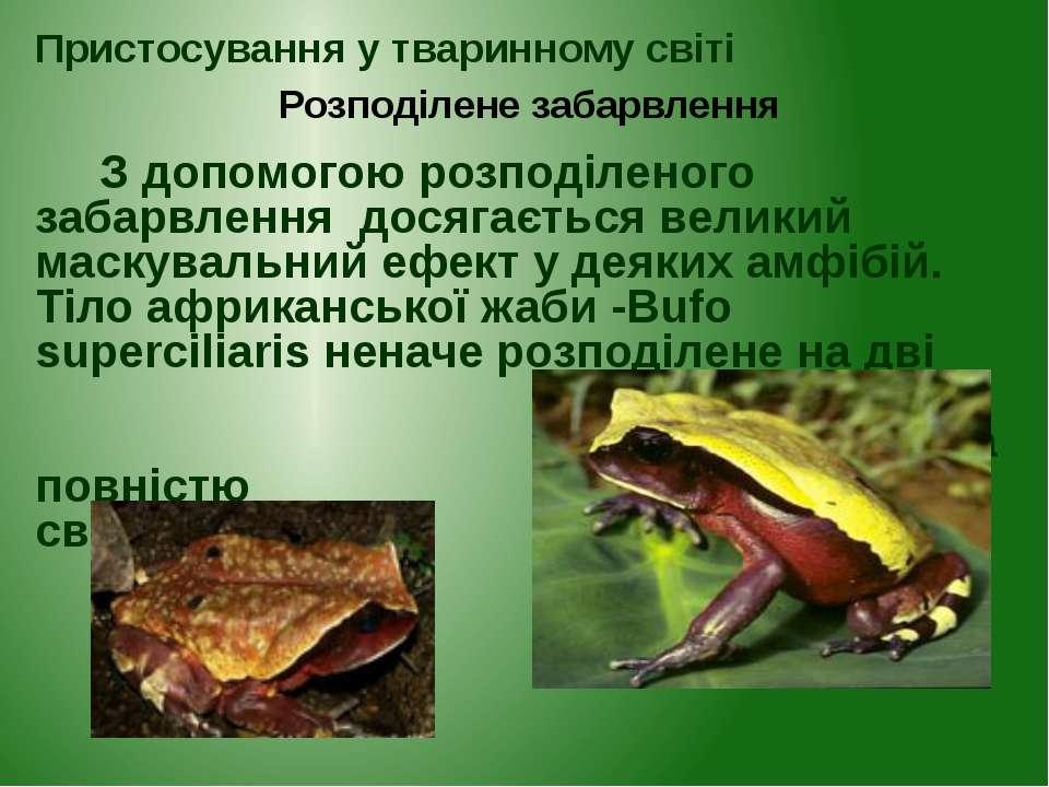 Пристосування у тваринному світі Розподілене забарвлення З допомогою розподіл...