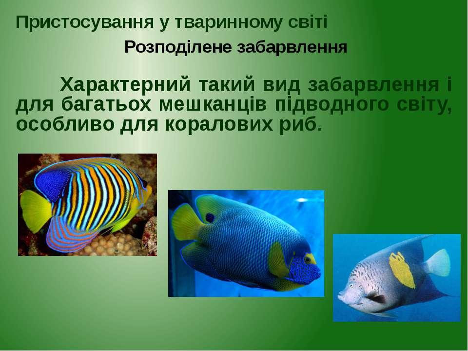 Характерний такий вид забарвлення і для багатьох мешканців підводного світу, ...