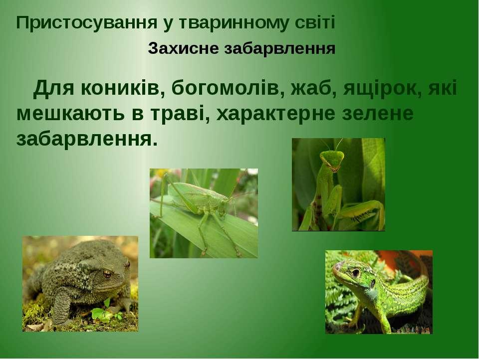 Пристосування у тваринному світі Захисне забарвлення Для коників, богомолів, ...