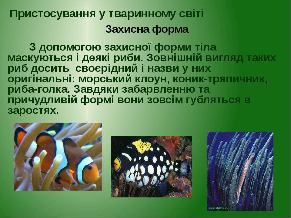 З допомогою захисної форми тіла маскуються і деякі риби. Зовнішній вигляд так...