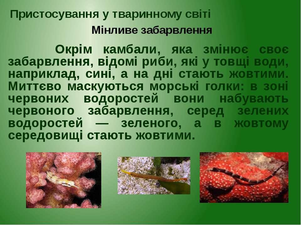 Окрім камбали, яка змінює своє забарвлення, відомі риби, які у товщі води, на...