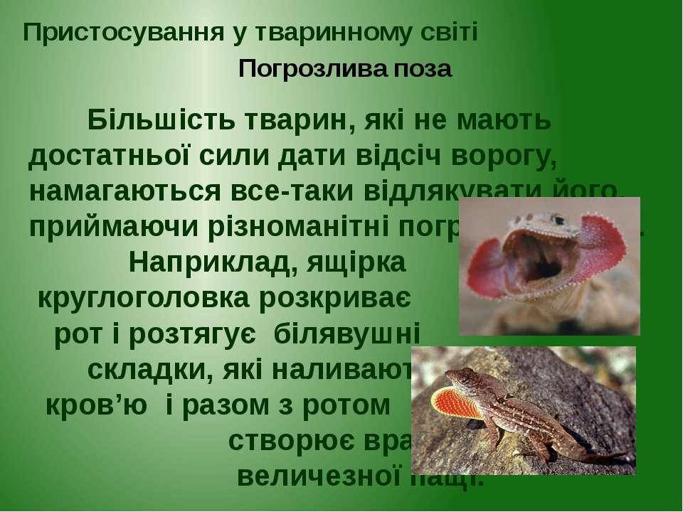 Більшість тварин, які не мають достатньої сили дати відсіч ворогу, намагаютьс...