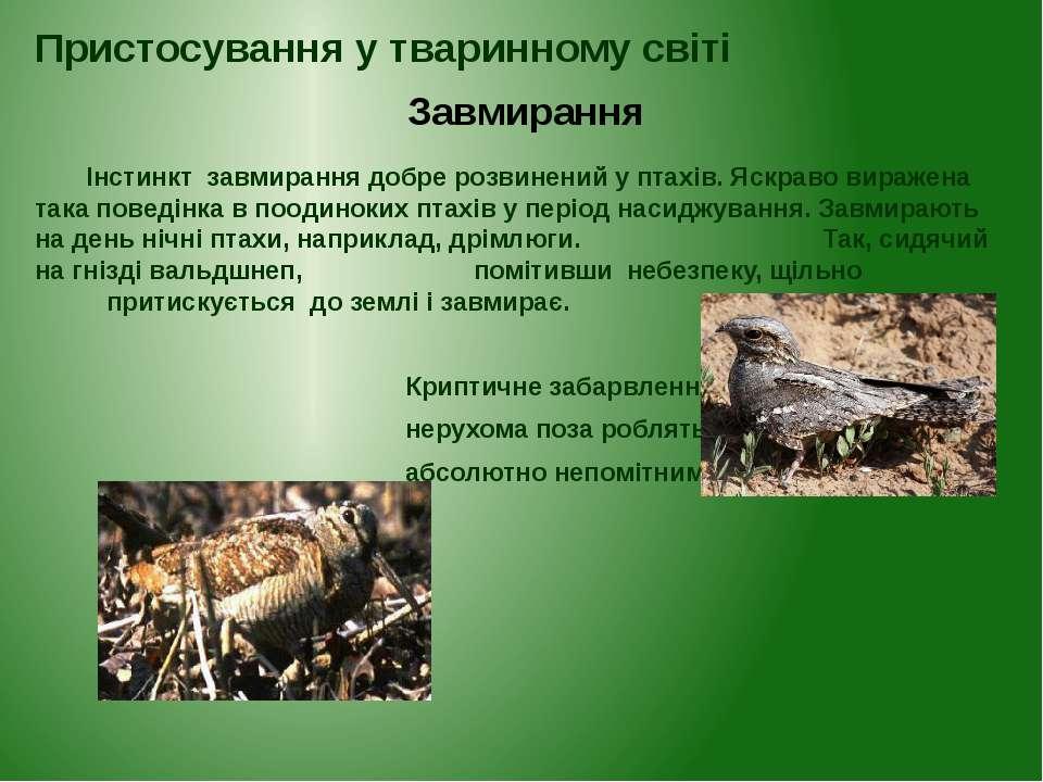 Інстинкт завмирання добре розвинений у птахів. Яскраво виражена така поведінк...