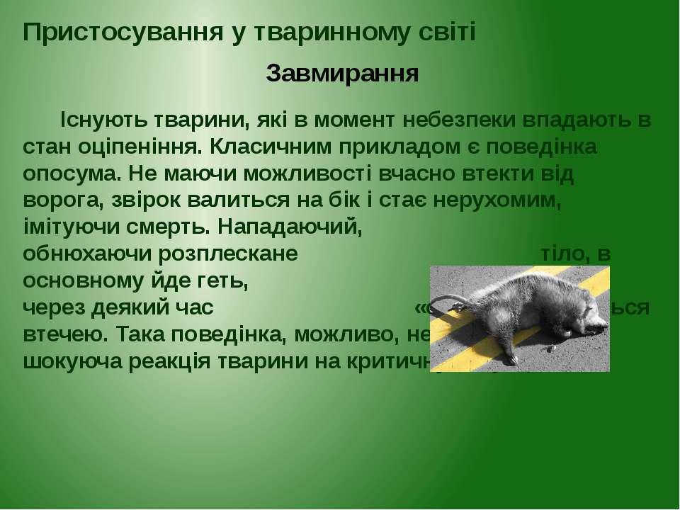 Існують тварини, які в момент небезпеки впадають в стан оціпеніння. Класичним...