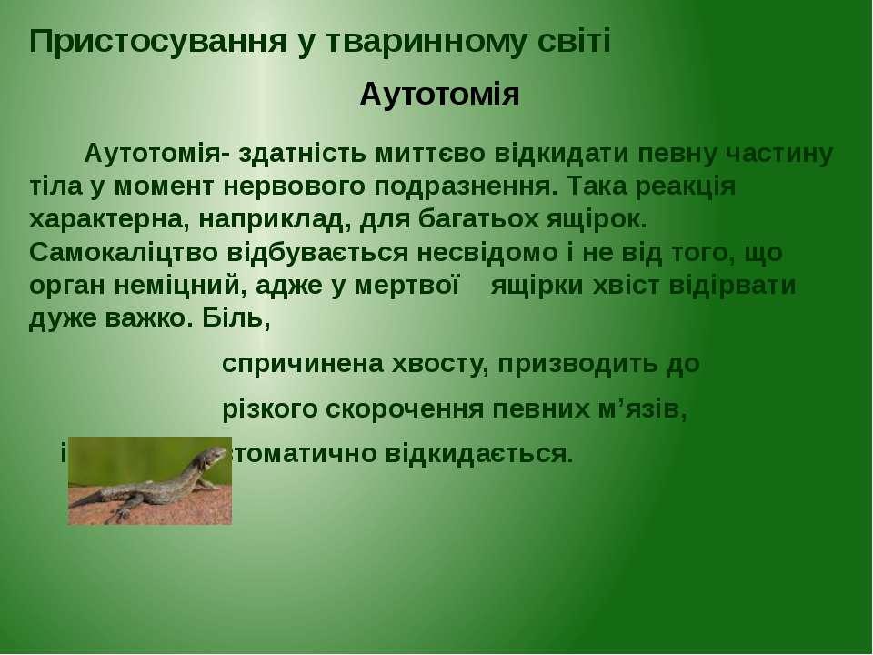 Аутотомія- здатність миттєво відкидати певну частину тіла у момент нервового ...