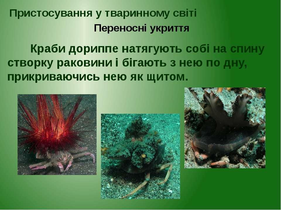 Краби дориппе натягують собі на спину створку раковини і бігають з нею по дну...