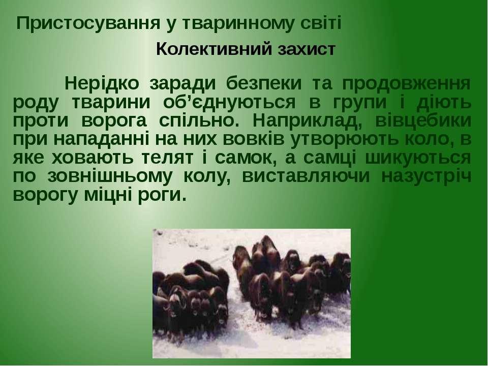 Нерідко заради безпеки та продовження роду тварини об'єднуються в групи і дію...