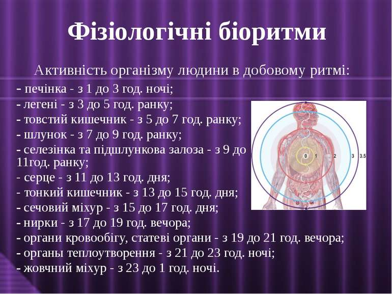 Активність організму людини в добовому ритмі: - печінка - з 1 до 3 год. ночі;...