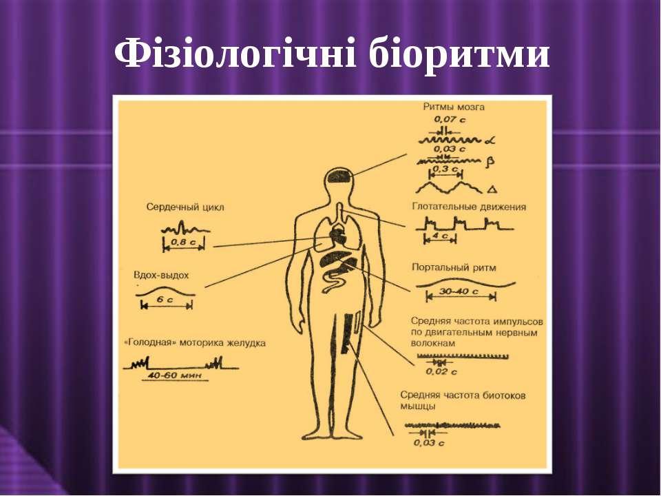 Фізіологічні біоритми