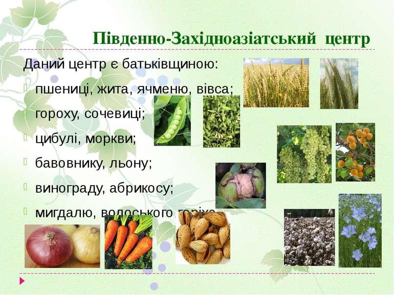 Південно-Західноазіатський центр Даний центр є батьківщиною: пшениці, жита, я...