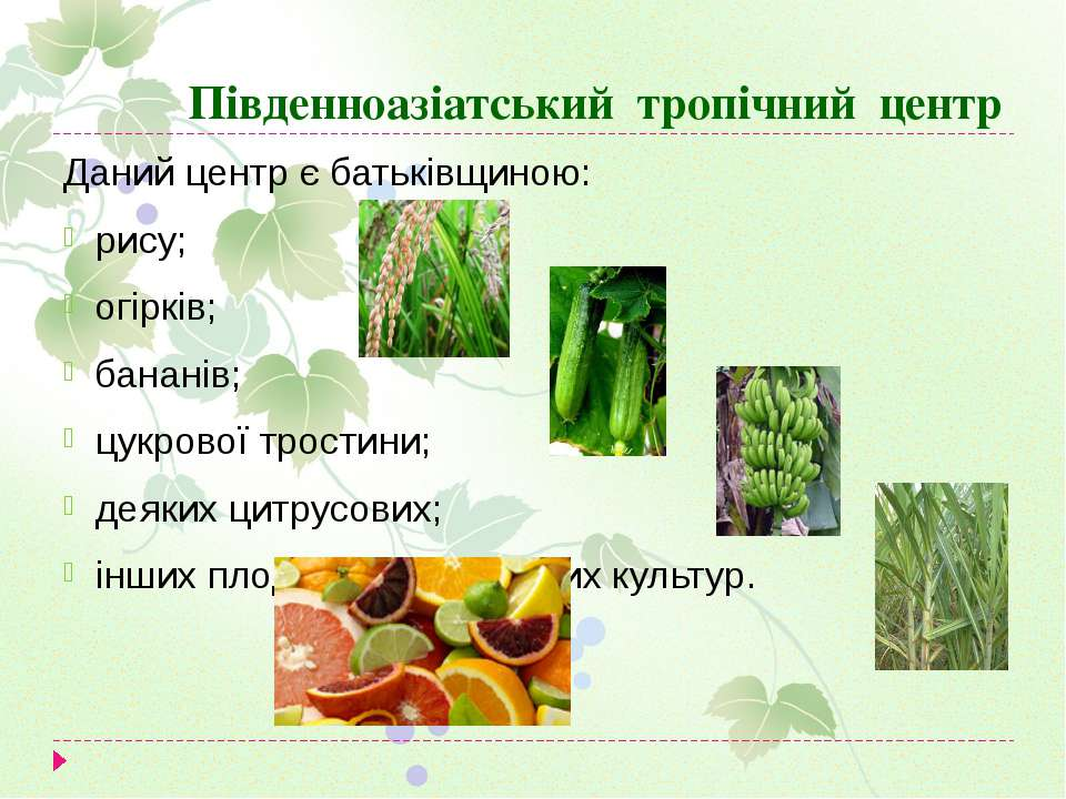 Південноазіатський тропічний центр Даний центр є батьківщиною: рису; огірків;...