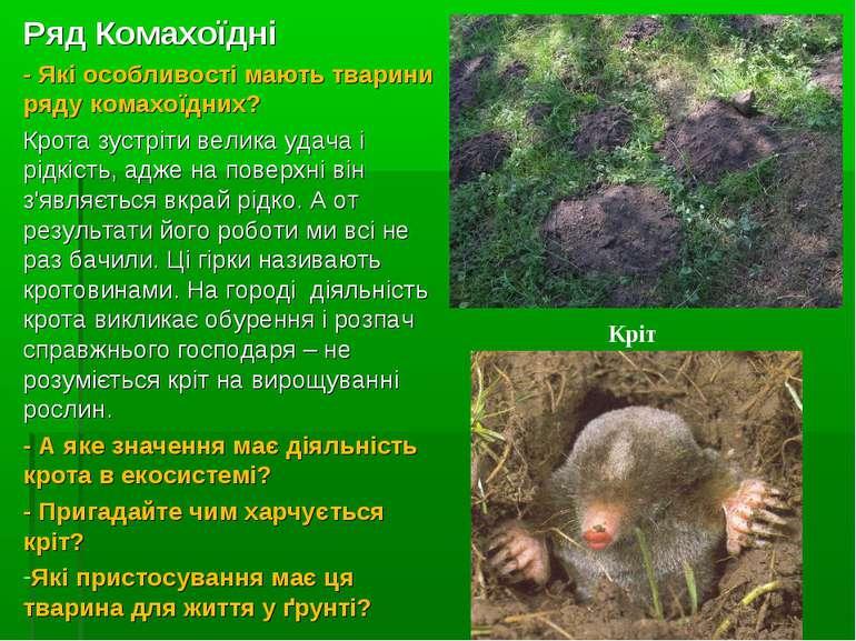 Ряд Комахоїдні - Які особливості мають тварини ряду комахоїдних? Крота зустрі...