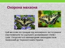 Цей метелик постраждав від непомірного застосування отрутохімікатів та суціль...