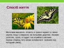 Спосіб життя Метеликимахаона літають в травні-червні і в липні-серпні, інод...
