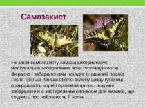 Самозахист Як засіб самозахисту комаха використовує маскувальне забарвлення: ...