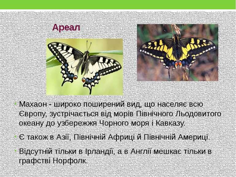 Махаон - широко поширений вид, що населяє всю Європу, зустрічається від морів...
