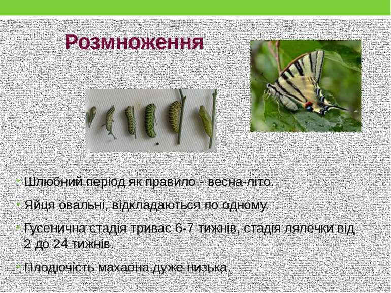 Розмноження Шлюбний періодяк правило - весна-літо. Яйцяовальні, відкладають...