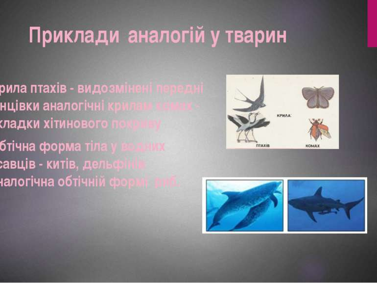Крила птахів - видозмінені передні кінцівки аналогічні крилам комах - складки...