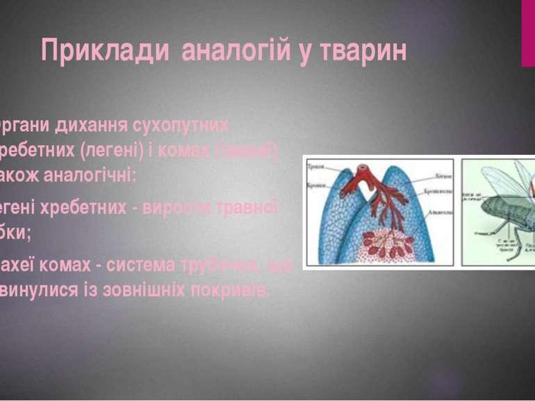 Органи дихання сухопутних хребетних (легені) і комах (трахеї) також аналогічн...