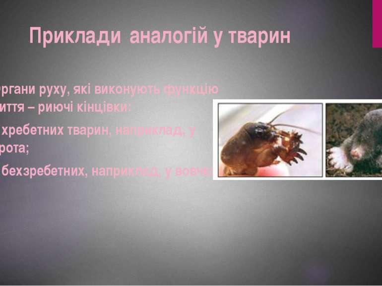 Органи руху, які виконують функцію риття – риючі кінцівки: у хребетних тварин...
