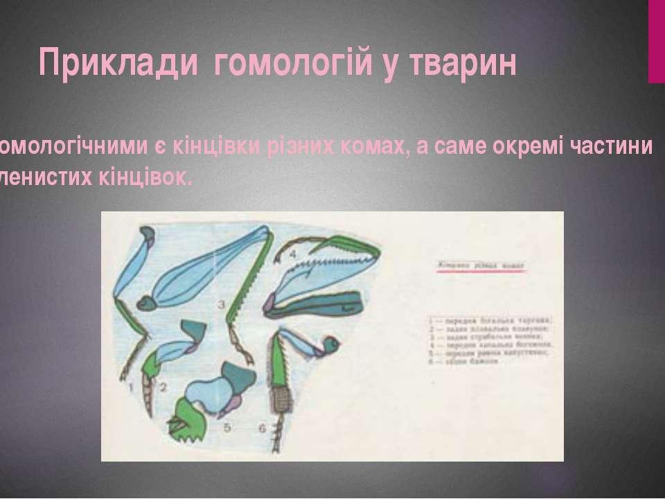 Гомологічними є кінцівки різних комах, а саме окремі частини членистих кінців...
