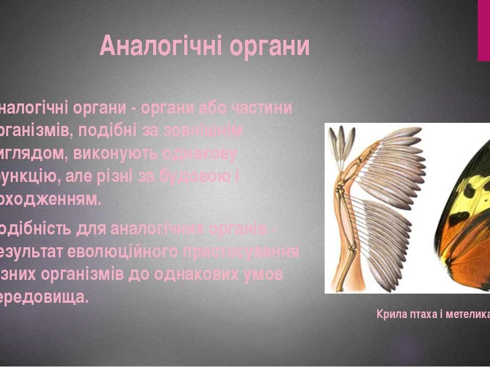 Аналогічні органи Аналогічні органи - органи або частини організмів, подібні ...