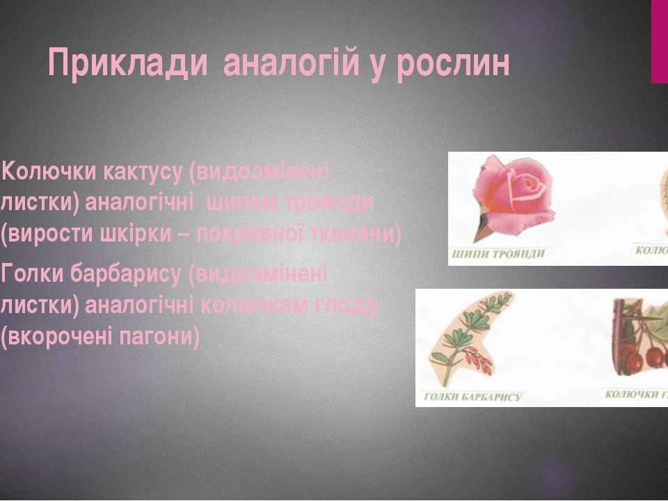 Колючки кактусу (видозмінені листки) аналогічні шипам троянди (вирости шкірки...