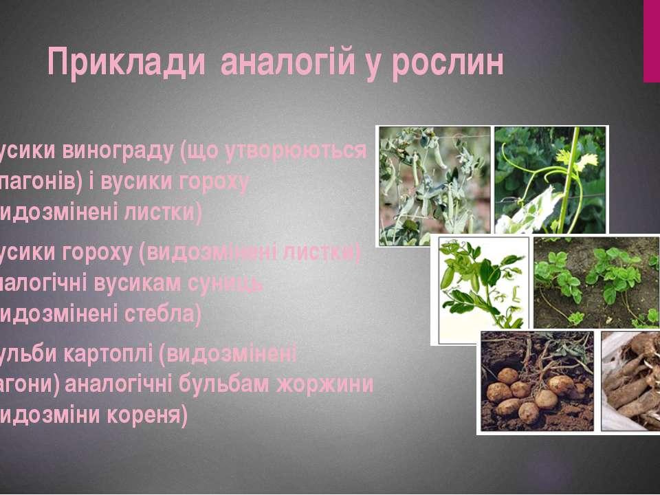 Вусики винограду (що утворюються з пагонів) і вусики гороху (видозмінені лист...