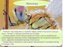 Личинки типу наяд мають трахейні зябра, живуть від одного року до трьох. Линя...